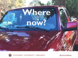 Dog in truck asks Where now?